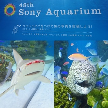 48th Sony Aquarium .JPG