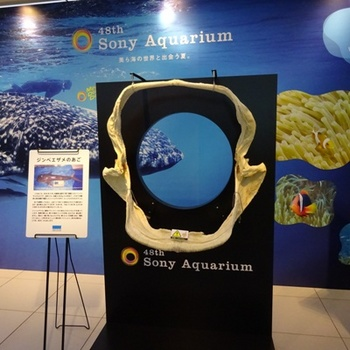 48th Sony Aquarium ジンベエザメのあご.JPG