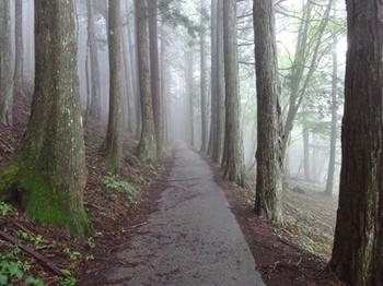 山の道.JPG