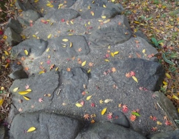 自然に飾られた階段.JPG