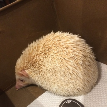 hedgehog1.jpg