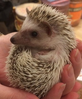 hedgehog3.jpg