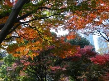 五島美術館庭園紅葉.JPG